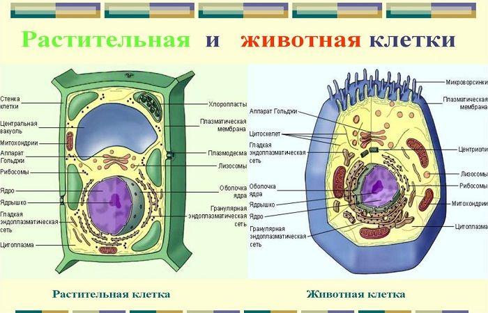 разные клетки