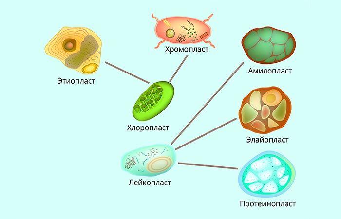 движение клеток