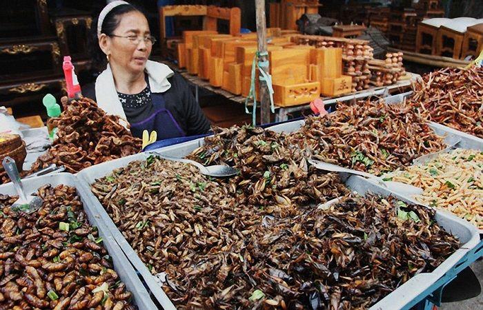 продажа насекомых